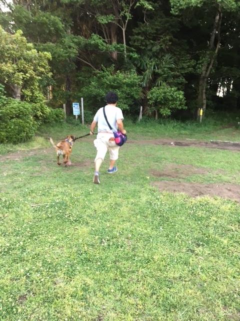 f:id:yawaraka-koinu:20180508173046j:plain