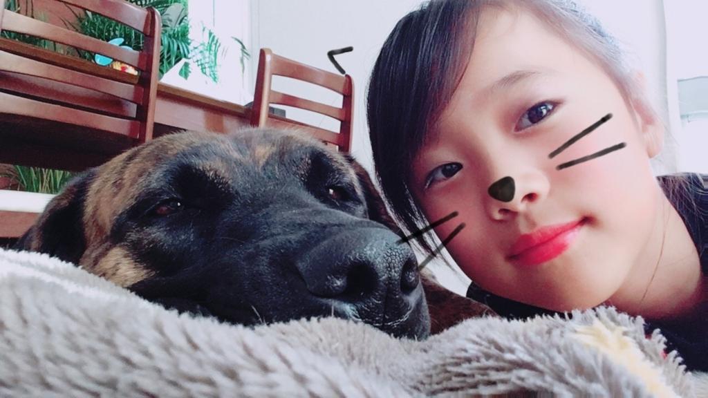 f:id:yawaraka-koinu:20180802195444j:plain