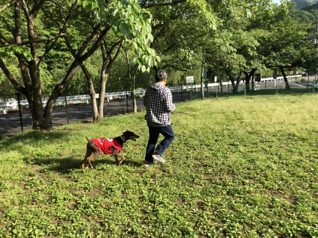 f:id:yawaraka-koinu:20180804125015j:plain