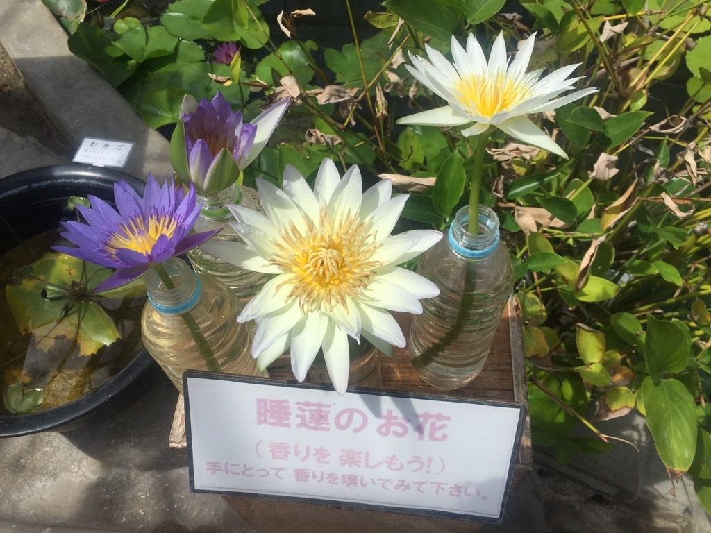 f:id:yawaraka-koinu:20180908172026j:plain