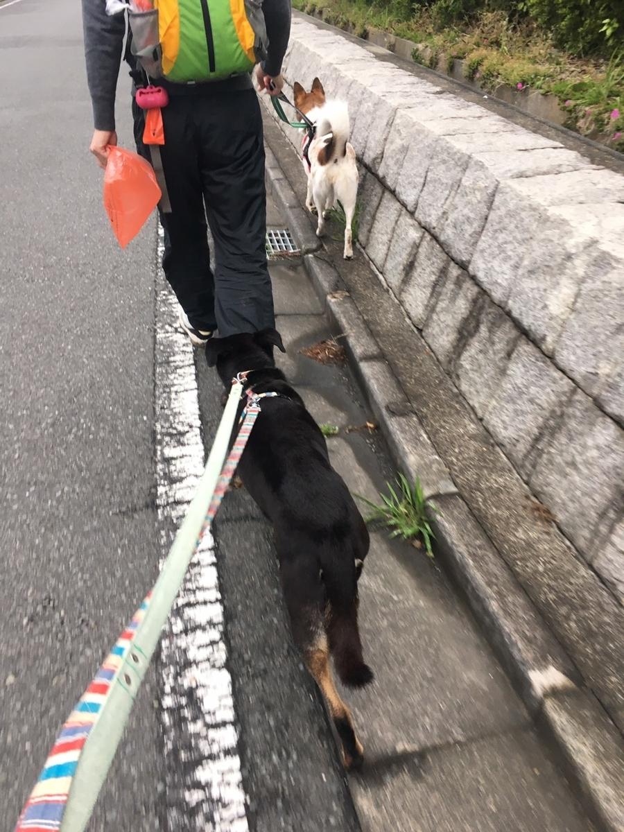 f:id:yawaraka-koinu:20190514180353j:plain