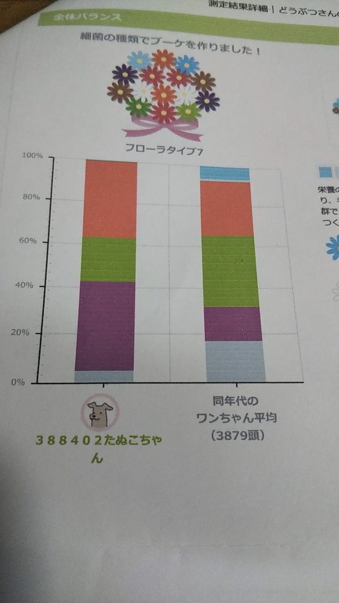 f:id:yawaraka-koinu:20190905221743j:plain