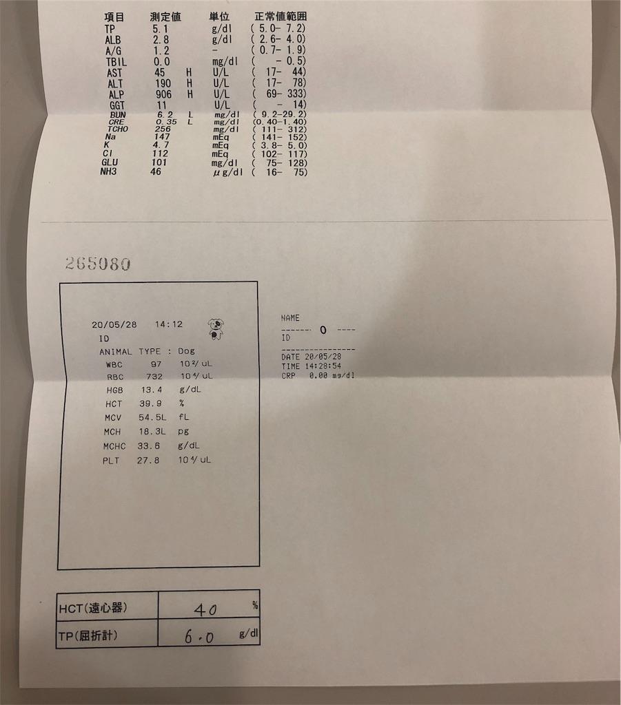 f:id:yawaraka-koinu:20200530090008j:image