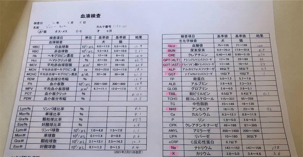 f:id:yawaraka-koinu:20210508152852j:image