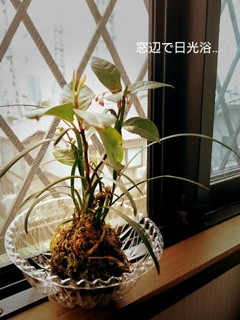 f:id:yayamosureba:20170612112049j:image
