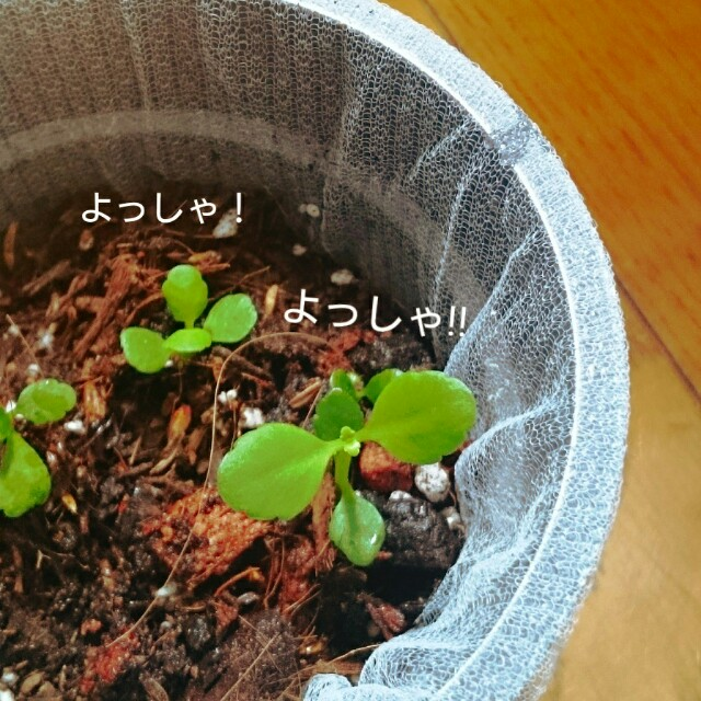 f:id:yayamosureba:20170619104303j:image