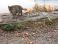 芦ノ湖の猫