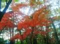紅葉2011長瀞