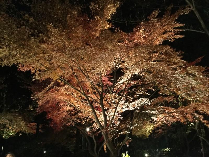f:id:yfukushima21:20171203184817j:image