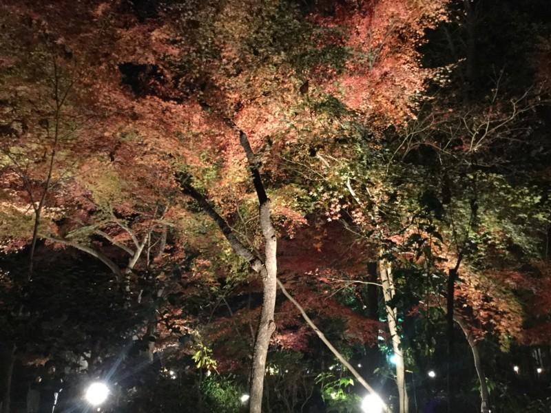 f:id:yfukushima21:20171203185116j:image