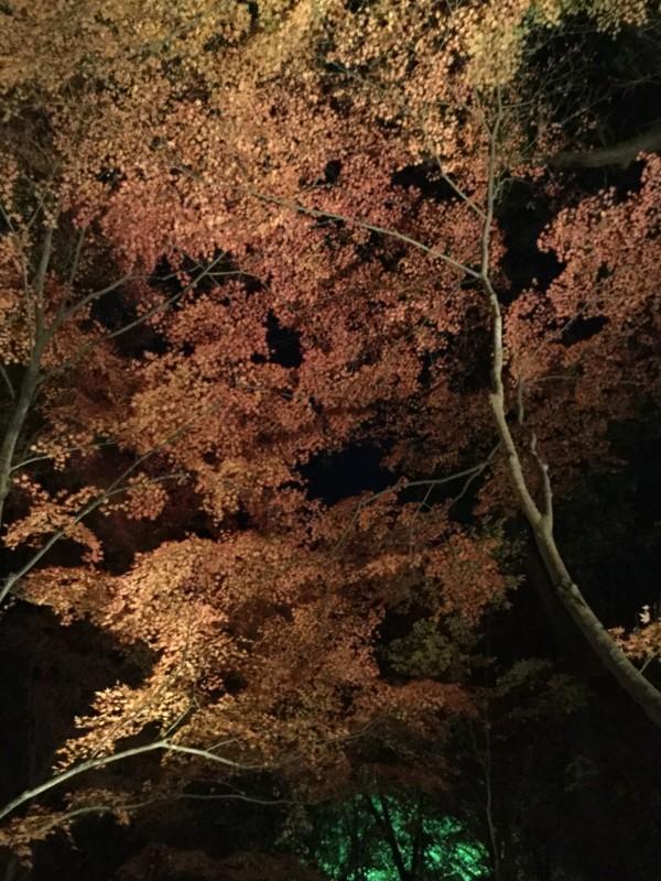 f:id:yfukushima21:20171203185749j:image