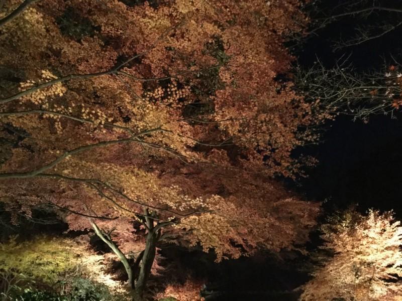 f:id:yfukushima21:20171203190019j:image