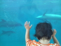 新江の島水族館