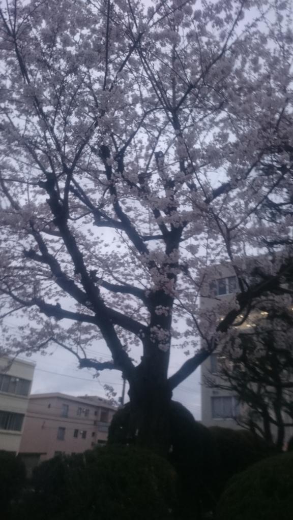 f:id:yikubo:20170412184924j:plain