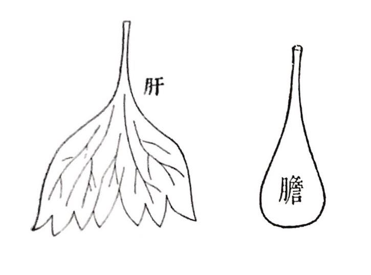 f:id:yinandyang1008:20181018114740j:plain