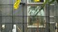 バラ(ホーム&ガーデン・エリザベス・ダビンチ)20160229