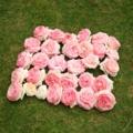 バラ(ピエールドゥロンサール)花がら33個