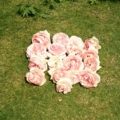バラ(ピエールドゥロンサール)花がら20160521