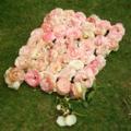 バラ(ピエールドゥロンサール)花がら70個