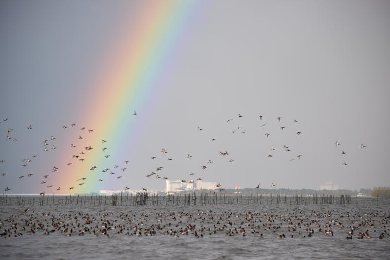 京都新聞写真コンテスト びわ湖虹の彼方に