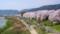 第15回京都新聞写真コンテスト 八幡背割堤の桜並木