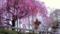 第15回京都新聞写真コンテスト 山門の枝垂桜