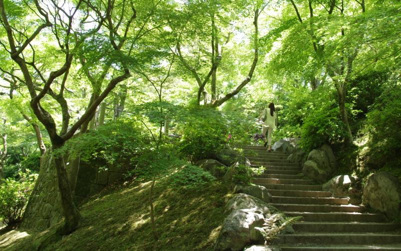 第15回京都新聞写真コンテスト新緑③