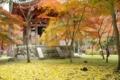 都新聞写真コンテストー醍醐寺の紅葉⑤