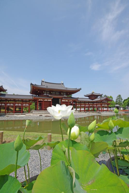 京都新聞写真コンテストー西方浄土に蓮花②