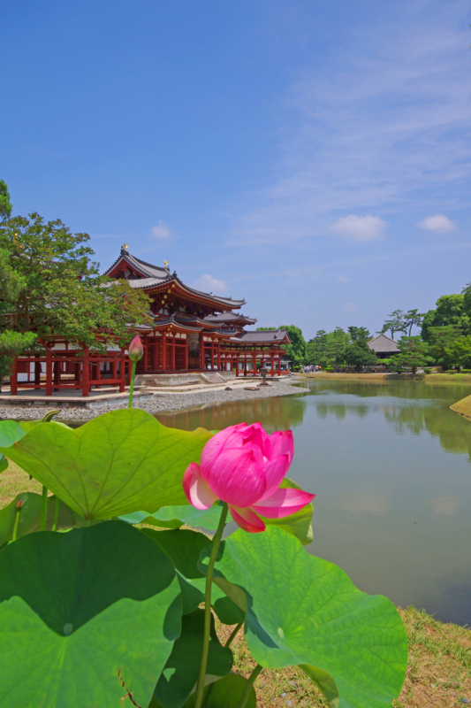 京都新聞写真コンテストー西方浄土に蓮花①