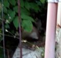 [近所の猫]