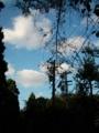 [空]木の間