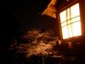 [兼六園]桜