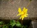 [花]颱風後