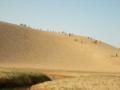 [鳥取砂丘]馬の背