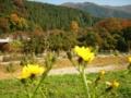 [花]山と花