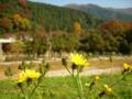 [花]花と山