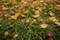 [兼六園]苔と落葉