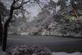 [兼六園][雪]