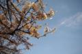 [花][空]桜