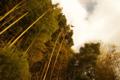[空]竹林