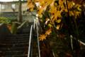 [階段]紅葉