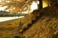 [花][階段]桜