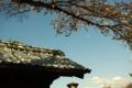 [金沢城址公園][空][花]桜