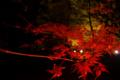 [兼六園]紅葉