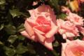 [花]プリンセス アイコ
