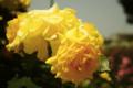 [花]ゴールド バニー