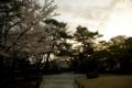 [兼六園][花]桜