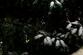 [雪][植物]