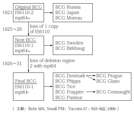 BCGワクチンの菌株の起源